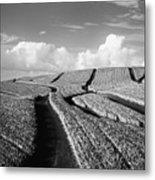 Pineapple Field - Bw Metal Print