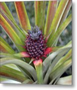 Pineapple, Oahu Metal Print