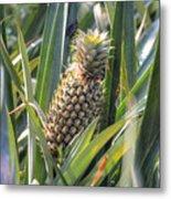 pineapple plantation in Kerala - India Metal Print