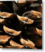 Pinecone Metal Print by The Forests Edge Photography - Diane Sandoval