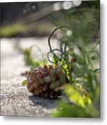 Pinecones And Wild Onions  Metal Print