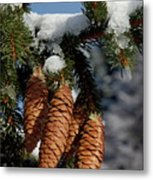 Pinecones Hanging From A Snow-covered Fir Tree Branch Metal Print