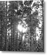 Pines 3 Metal Print