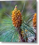 Pines In Bloom Metal Print