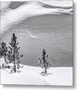 Pines In Snow Drifts Black And White Metal Print
