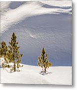 Pines In The Snow Drifts Metal Print