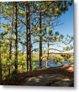 Pines On Sunny Cliff Metal Print