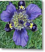 Pinewoods Lily Metal Print