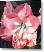 Pink Amaryllis Metal Print