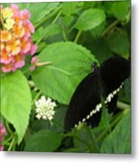 Pink And Black In The Garden Metal Print