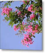 Pink And Blue Canopy Metal Print