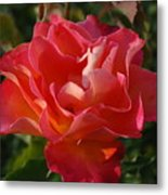 Pink And Gold Rose Metal Print