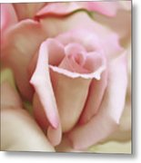 Pink And Ivory Rose Portrait Metal Print