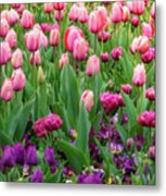 Pink And Purple Tulips At The Spring Floriade Festival Metal Print