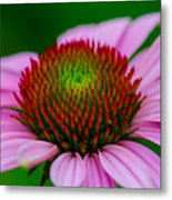 Pink And Red Metal Print