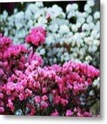 Pink And White Azelas Metal Print