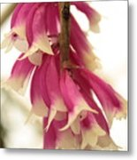 Pink And White Bells Metal Print