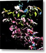Pink And White Blossoms Metal Print