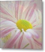 Pink And White  Metal Print
