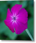 Pink And White Flower Metal Print