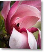 Pink And White Magnolia Metal Print
