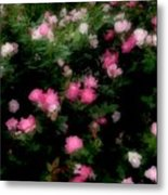 Pink And White Roses Metal Print