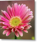 Pink And White Metal Print