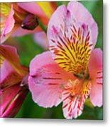 Pink And Yellow Flora Metal Print