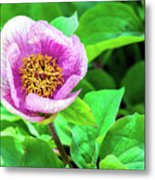 Pink And Yellow Flower Metal Print