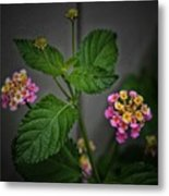 Pink And Yellow Flowers Metal Print