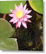 Pink And Yellow Lotus Flower Metal Print