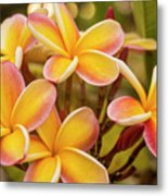 Pink And Yellow Plumeria 2 Metal Print