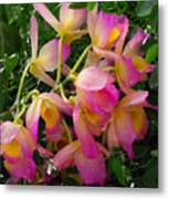 Pink And Yellow Tropical Flowers Metal Print