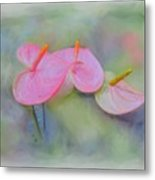 Pink Anthurium Metal Print