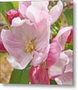 Pink Apple Blossoms Art Prints Spring Trees Baslee Troutman Metal Print