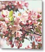 Pink Apple Blossoms Metal Print by Sandra Cunningham