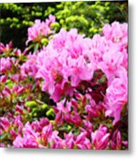 Pink Azalea Flowers Landscape 11 Art Prints Canvas Artwork Framed Art Cards Metal Print
