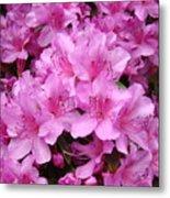 Pink Azaleas Summer Garden 6 Azalea Flowers Giclee Art Prints Baslee Troutman Metal Print