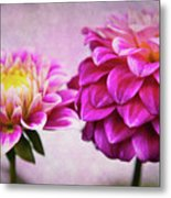 Pink Beauties Metal Print