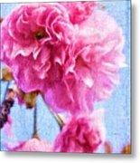 Pink Bellos Metal Print