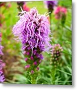 Purple Blazing Star 01 Metal Print