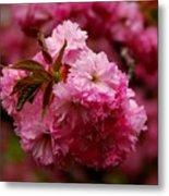 Pink Blooms Metal Print