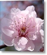 Pink Blossom Nature Art Prints 34 Tree Blossoms Spring Nature Art Metal Print