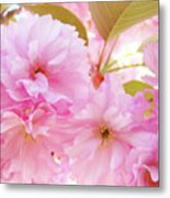 Pink Blossoms Art Prints Canvas Spring Tree Blossoms Baslee Troutman Metal Print