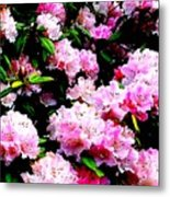 Pink Blossoms Metal Print