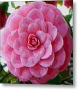 Pink Camellia Dream  Metal Print