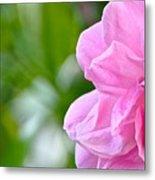 Pink Camellia Metal Print by Lori Kesten