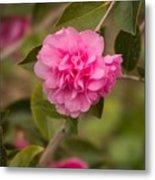 Pink Camellia 2 Metal Print