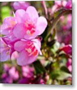 Pink Cardinal Bush Flowers Metal Print