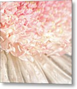 Pink Chrysanthemum With Antique Distress Metal Print